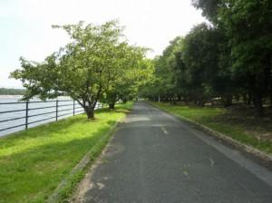 (写真)浜寺公園サイクリングロード