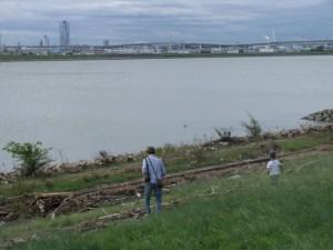 淀川河川敷には、多くの流木が流れ着いていました