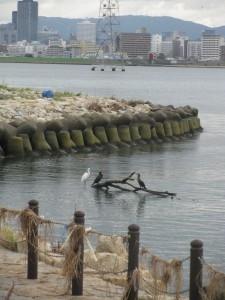 台風で流れ着いた流木で鳥たちが休んでいました